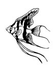 black fish drawing